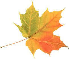 Fall Moving Winnipeg